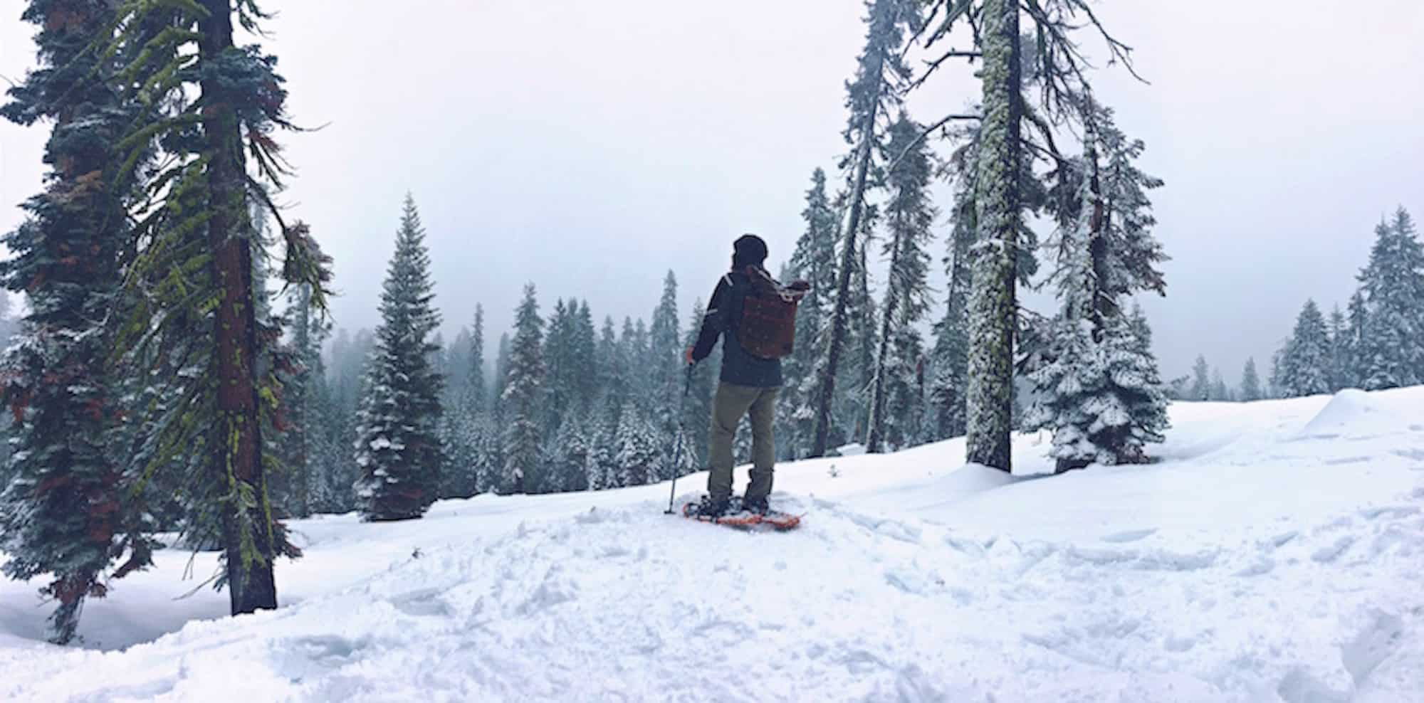 Skier in the woods